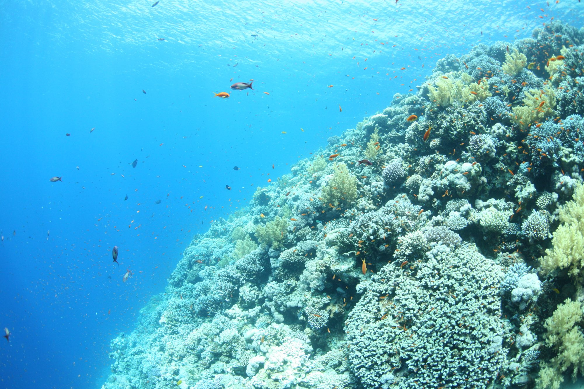 guided dives – corals