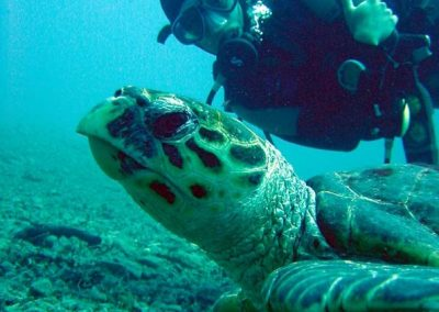 turtle & diver